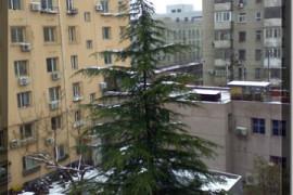 新年的第一场雪