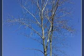 没有沙尘暴的春天——连续第三个蓝天