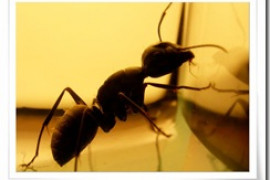 蚂蚁和大象的全部幽默笑话