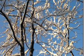 这个冬天的最后一场雪